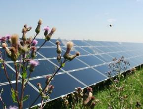 Erneuerbare Energien: sicher, sauber, zunehmend preisgünstig
