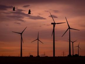 Windkraft und Artenschutz in Einklang bringen